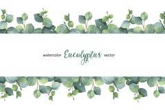 Διανυσματικό πράσινο floral έμβλημα Watercolor με τα ασημένιους φύλλα και τους κλάδους ευκαλύπτων δολαρίων στο άσπρο υπόβαθρο Στοκ Εικόνα
