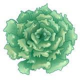 Διανυσματικό πράσινο succulent τροπικό λουλούδι Floral βοτανικό λουλούδι Απομονωμένο στοιχείο απεικόνισης διανυσματική απεικόνιση