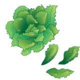 Διανυσματικό πράσινο succulent τροπικό λουλούδι Floral βοτανικό λουλούδι Απομονωμένο στοιχείο απεικόνισης απεικόνιση αποθεμάτων