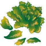 Διανυσματικό πράσινο succulent τροπικό λουλούδι Floral βοτανικό λουλούδι Απομονωμένο στοιχείο απεικόνισης ελεύθερη απεικόνιση δικαιώματος