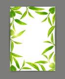 Διανυσματικό πρότυπο με ένα πλαίσιο των πράσινων φύλλων τσαγιού, που απομονώνεται στο wh ελεύθερη απεικόνιση δικαιώματος