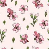 Διανυσματικό ρόδινο αμύγδαλο κεραμιδιών διακοσμήσεων λουλουδιών διανυσματική απεικόνιση