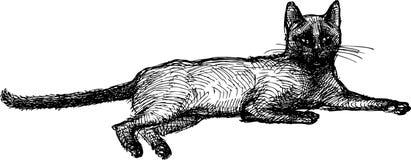 Να βρεθεί γάτα Στοκ εικόνα με δικαίωμα ελεύθερης χρήσης