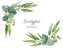 Διανυσματικό στεφάνι Watercolor με τα πράσινους φύλλα και τους κλάδους ευκαλύπτων διανυσματική απεικόνιση