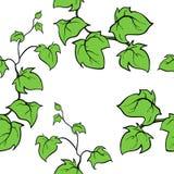 Διανυσματικό συρμένο χέρι άνευ ραφής σχέδιο κισσών Στοκ Εικόνες