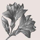 Διανυσματικό συρμένο χέρι αφηρημένο λουλούδι στο εκλεκτής ποιότητας ύφος Στοκ Φωτογραφία