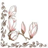 Διανυσματικό συρμένο χέρι πλαίσιο γωνιών λουλουδιών magnolia Στοκ φωτογραφία με δικαίωμα ελεύθερης χρήσης