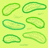 Διανυσματικό συρμένο χέρι σκίτσο των πράσινων αγγουριών Έγχρωμη εικονογράφηση στο φωτεινό υπόβαθρο διανυσματική απεικόνιση