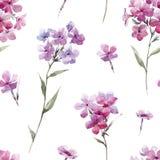 Διανυσματικό σχέδιο phlox Watercolor floral Στοκ Φωτογραφίες