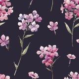 Διανυσματικό σχέδιο phlox Watercolor floral Στοκ Φωτογραφία