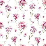 Διανυσματικό σχέδιο phlox Watercolor floral Στοκ φωτογραφίες με δικαίωμα ελεύθερης χρήσης