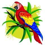 Διανυσματικό σχέδιο ενός μεγάλου φωτεινού χρωματισμένου παπαγάλου στα πράσινα φύλλα υποβάθρου διανυσματική απεικόνιση