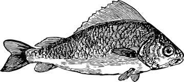 Saltwater ψάρια Στοκ Φωτογραφία