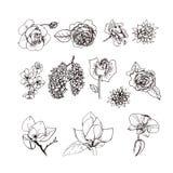 Διανυσματικό σύνολο απεικονίσεων λουλουδιών Στοκ Εικόνες