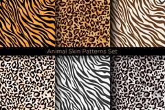 Διανυσματικό σύνολο απεικόνισης ζωικών άνευ ραφής τυπωμένων υλών Συλλογή σχεδίων τιγρών και λεοπαρδάλεων στα διαφορετικά χρώματα  διανυσματική απεικόνιση