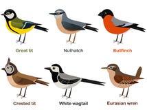 Διανυσματικό σύνολο απεικόνισης χαριτωμένων ευρωπαϊκών κινούμενων σχεδίων πουλιών - μεγάλο τ διανυσματική απεικόνιση