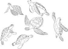 Διανυσματικό σύνολο απομονωμένου χελώνα υποβάθρου θάλασσας ελεύθερη απεικόνιση δικαιώματος