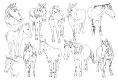 Διανυσματικό σύνολο εικόνας ενός αλόγου στο άσπρο υπόβαθρο Απεικόνιση σκίτσων περιλήψεων του όμορφου πορτρέτου ένα αλόγων γραμμή Στοκ εικόνα με δικαίωμα ελεύθερης χρήσης