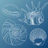 Διανυσματικό σύνολο θαλασσινών κοχυλιών στοκ εικόνες με δικαίωμα ελεύθερης χρήσης