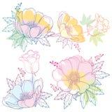 Διανυσματικό σύνολο λουλουδιού ή Windflower Anemone περιλήψεων σχεδίων χεριών, οφθαλμού και φύλλου στο ρόδινο, πορτοκαλί και μπλε ελεύθερη απεικόνιση δικαιώματος