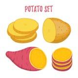 Διανυσματικό σύνολο πατατών Ιώδεις γλυκές, καφετιές πατάτες, φέτες Επίπεδο ύφος κινούμενων σχεδίων Στοκ Φωτογραφίες