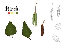 Διανυσματικό σύνολο στοιχείων δέντρων σημύδων που απομονώνονται στο άσπρο υπόβαθρο απεικόνιση αποθεμάτων