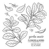 Διανυσματικό σύνολο συντρόφων Yerba απεικόνιση αποθεμάτων