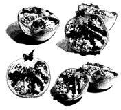 Διανυσματικό σύνολο συρμένων χέρι απεικονίσεων του γρανάτη που απομονώνονται ελεύθερη απεικόνιση δικαιώματος