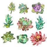 Διανυσματικό σύνολο floral στοιχείων σε ένα ύφος watercolor Succulents που χρωματίζεται στο watercolor Στοκ Εικόνες