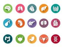 Διανυσματικό σύνολο εικονιδίων ανθρώπινων εσωτερικών οργάνων Στοκ Εικόνα