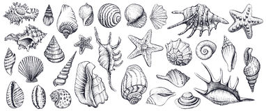 Διανυσματικό σύνολο θαλασσινών κοχυλιών συρμένες απεικονίσεις χεριών Στοκ Φωτογραφία
