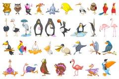 Διανυσματικό σύνολο διάφορων απεικονίσεων πουλιών ελεύθερη απεικόνιση δικαιώματος