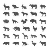 Διανυσματικό σύνολο κατοικίδιων ζώων και άγριων ζώων Στοκ Εικόνες