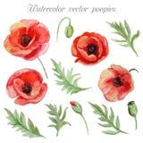 Διανυσματικό σύνολο κόκκινων λουλουδιών παπαρουνών watercolor Στοκ φωτογραφίες με δικαίωμα ελεύθερης χρήσης