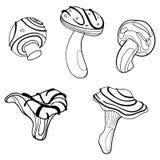 Διανυσματικό σύνολο μανιταριών Συλλογή των τυποποιημένων εδώδιμων μανιταριών Γραπτό σχέδιο με το χέρι γραμμική τέχνη Δερματοστιξί Στοκ Φωτογραφίες