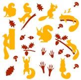 Διανυσματικό σύνολο πορτοκαλιών γούνινων σκιούρων με τα καρύδια στο άσπρο υπόβαθρο Στοκ εικόνες με δικαίωμα ελεύθερης χρήσης