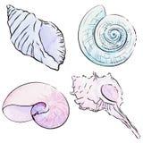Διανυσματικό σύνολο συρμένων χέρι θαλασσινών κοχυλιών watercolor Στοκ Εικόνες