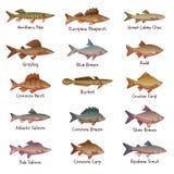 Διανυσματικό σύνολο των περισσότερων δημοφιλών του γλυκού νερού ψαριών Στοκ Φωτογραφία