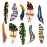 Διανυσματικό σύνολο φτερών Στοκ Φωτογραφίες