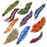 Διανυσματικό σύνολο φτερών Στοκ Εικόνες