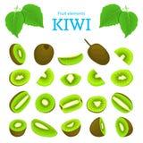 Διανυσματικό σύνολο ώριμων τροπικών φρούτων ακτινίδιων Kiwifruit που ξεφλουδίζεται, μισός σπόρος φετών κομματιού Εύγευστος πράσιν ελεύθερη απεικόνιση δικαιώματος