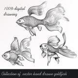 Διανυσματικό σύνολο filigree που σύρεται goldfish στο εκλεκτής ποιότητας ύφος Στοκ Εικόνα