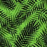 Διανυσματικό τροπικό φοινικών floral διακοσμητικό υπόβαθρο ζουγκλών σχεδίων φύλλων άνευ ραφής απεικόνιση αποθεμάτων
