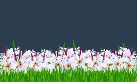 Διανυσματικό υπόβαθρο λουλουδιών με την πράσινη χλόη Στοκ Φωτογραφίες