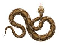 Διανυσματικό φίδι οχιών που απομονώνεται στο άσπρο υπόβαθρο Στοκ φωτογραφία με δικαίωμα ελεύθερης χρήσης