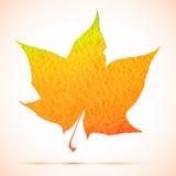 Διανυσματικό φύλλο σφενδάμου φθινοπώρου watercolor με τη σκιά Στοκ Φωτογραφίες