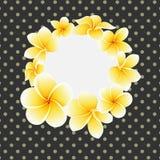 Διανυσματικό χρυσό λουλούδι frangipani ή plumeria στην κάρτα υποβάθρου σημείων Πόλκα απεικόνιση αποθεμάτων