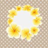 Διανυσματικό χρυσό λουλούδι frangipani ή plumeria στην κάρτα υποβάθρου σημείων Πόλκα ελεύθερη απεικόνιση δικαιώματος