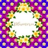 Διανυσματικό χρυσό λουλούδι frangipani ή plumeria στη φωτεινή κάρτα υποβάθρου διανυσματική απεικόνιση