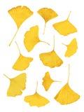 Διανυσματικό χρυσό ginkgo-φύλλο Στοκ Φωτογραφίες
